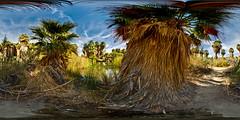 Oasis - Thousand Palms (SdosRemedios) Tags: california panorama smithsonian 360 oasis hdr palmdesert equirectangular perfectpanoramas sdosremedios size1x2 abigfave 2006stevendosremedios highdynamicrangesphericalpanorama