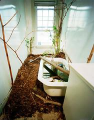 tublarge (garten_mike) Tags: plants window nature water bathroom pond sink providence rhodeisland installation tub bathtub stalk mulch bathwater