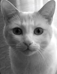 Pigsy B&W (thewtuck) Tags: portrait england bw dog white black cute cat photography pig photo nikon flickr photographer photos pics pussy picture photograph amateur pussies phlog thew topcat d40 thewtuck thewtucker thewsphlog