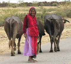On the way to Jhalawar, Rajasthan,