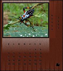 Zoo Calendar March