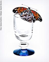 Still (Darlan) Tags: blue dan glass butterfly still fuji daniel borboleta s5200 infinito copo fundo silveira darlan câmeradeourobrasil kafeltz danorbit trabalhoemconjunto
