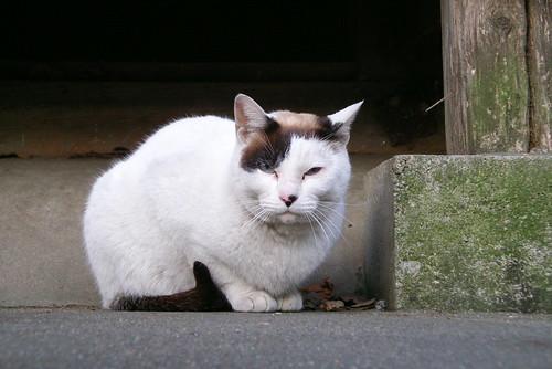 Today's Cat@20070309