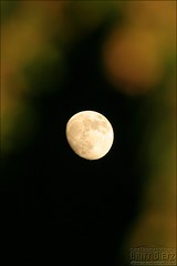 Rising moon (FrogMiller) Tags: california sky moon tree leaves wow disneyland luna moonrise anaheim moonface anawesomeshot flickrdiamond brittdietz