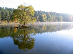 One-tree island (George*50) Tags: travel trees mist reflections europe lakes czechrepublic ponds bohemia cechy zvikov canons1is themoulinrouge pisek cesko superaplus aplusphoto oslov pisecko ysplix