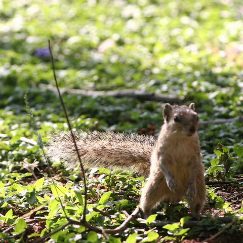 The squirrel that wanted to furnish her home 1