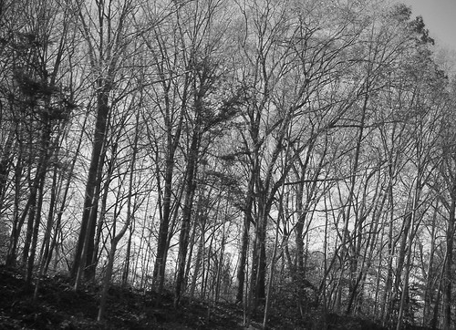Trees2BW