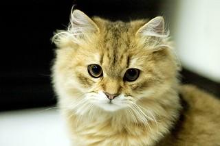 Very little cat 很小貓