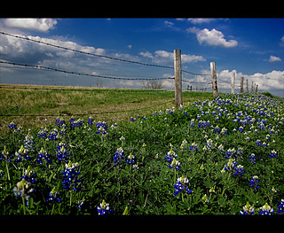 A Texas Roadside
