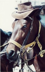 horse & hat  / 1997 / Real del 14 (toltequita) Tags: horse brown film hat 35mm mexico caballo cafe sombrero canoscan realdecatorce realde14 catorce sanluispotosi abigfave wixarika isawyoufirst wowiekazowie toltequita juanrojo sombrerodeagustin decoratedanimal
