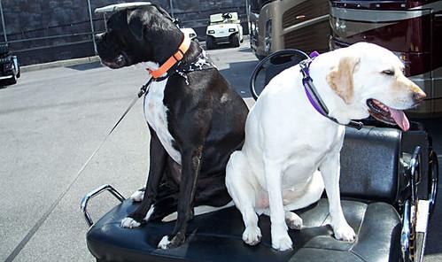 dale earnhardt jr. 2006 girlfriend miss emily. Dale Earnhardt Jr#39;s dog,