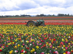 John Deere (Nicole Marti) Tags: sky tractor flower color nature field wheel oregon portland tulip deere johndeere