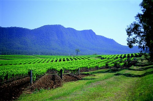 Hunter Valley Wine Region