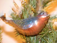 sparkling bird