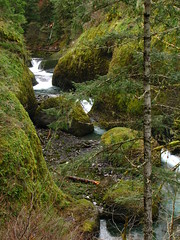 Three Miles In (pdxsean) Tags: green water oregon moss hike gorge untouched columbiagorge unchanged unedited canons2is http360yahoocommagiciangob