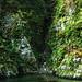 白神山地:DSC_0261