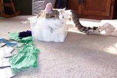 Same Box, Different Cat