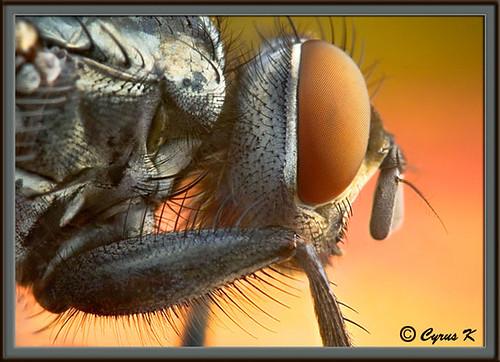 Mega fly