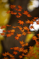 kyo_2006autumn_walk 45 (private_2eyes) Tags: autumn red tree maple kyoto      sinnyodou