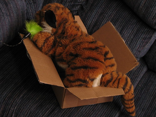 Tiger in Box