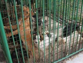 Kinship Circle - 2007-01-23 - 01 - Section 3, Serbia