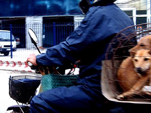 Motocicleta transportando perros al restaurante