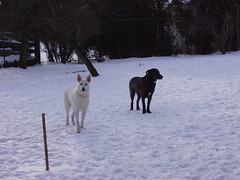 tala cody backyard snow 056