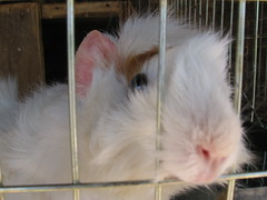 Conejo encarcelado