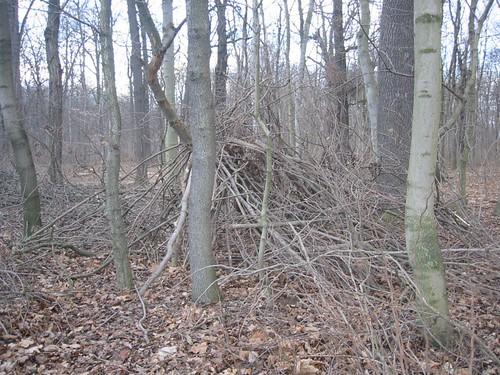 Twigs 6