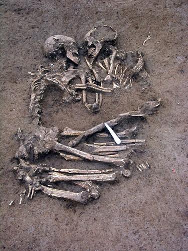 Amor prehistórico