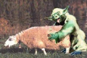 Yoda Loves Ewe