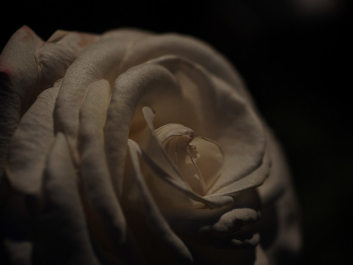 赤い薔薇・白いばら 2