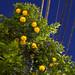 Overhead night citrus.