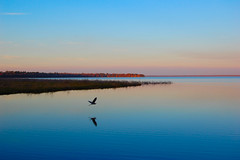 Tranquility (our cultural archive) Tags: lake reflection nature landscape bravo searchthebest florida wildlife coolest oarsquare