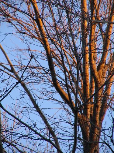 My Neighbour's Tree