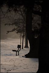 bench and fog (dogfaceboy) Tags: park trees snow tree ice silhouette fog sunrise bench dawn path explore candidate allrightsreserved herringrun cwd herringrunpark poetree interestingness161 dogfaceboy i500 explore37 lesliefmiller cwdgs takeaclasswithdavedave tacwdd takeaclasswithdaveanddave cwd63 cwd6 cwdgs6 cwdfinalsubmission lesliefmiller explwhore