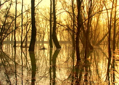 Flooded Forest (aremac) Tags: trees reflection water bravo searchthebest serbia sava obrenovac