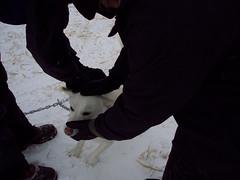 100_5508 (jeepinjason) Tags: vacation snow ski colorado vail dogsledding snowskiing