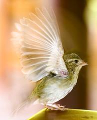 slow sync bird