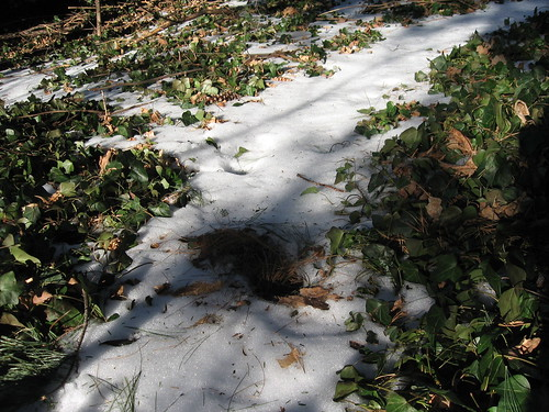 Ivy & Snow Path