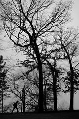 Your story? (Mingfong) Tags: bw monochrome wisconsin walking story madison albumcover stories 黑白 藝術照 桌布 mingfong 風景攝影 黑白攝影 musicflyer mingfongjan artbrochure sketchoflight mingfongphotography 黑白風景攝影