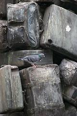 valises et pigeon