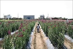 向陽農場92