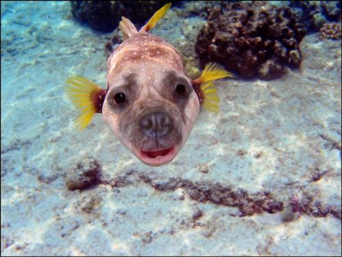 The Face - Dog fish par oddsock