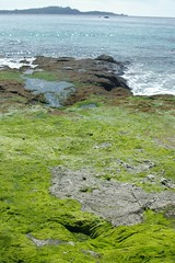 Creeping green (cwgoodroe) Tags: ocean california bridge blue sea green beach grass sunshine northerncalifornia stone digital lens relax bay monterey moss spring sand san francisco rocks surf day waves pentax crystal salt lion bluewater bridges sunny sealife cliffs fisheye area carmel seals romantic sealion northern relaxed ist otters saltwater hotday pentaxist stonebridge alge crystalblue