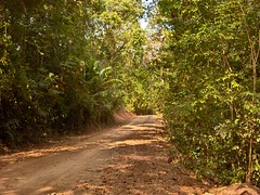 jungle_road