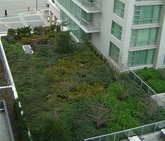 Victoria BC Marriott Green Roof