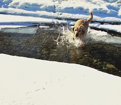 Spring Break (jack4pics) Tags: ice alaska spring labrador beak