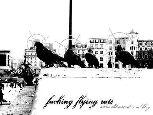 FUCKING FLYING RATS WALLPAPER 1600 x 1200