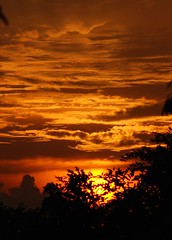 Another day closer to death ... take two (pranav_seth) Tags: trees sunset red orange brown black nature colors leaves clouds ilovenature singapore goldensunset fireinthesky naturescenes